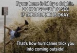 If Your Home Is Hit By A Dolphin...