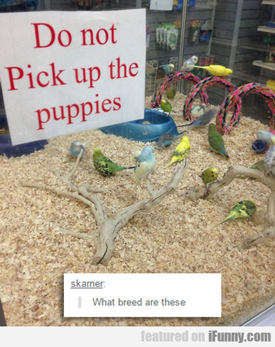 Do Not Pick Up The Puppies...