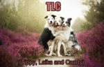 Tlc Tippy Laika And Candy