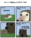 How A Hedgehog Protects Itself