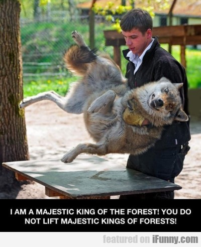 I Am A Majestic King Of The Forest