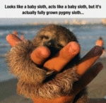 Looks Like A Baby Sloth Acts Like A Baby