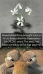 Researchers Have Brought Back An Arctic Flower...