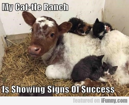 My Cat-tle Ranch