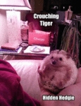 Crounching Tiger