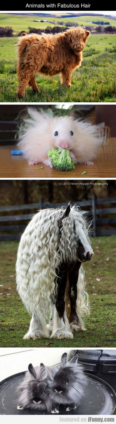 Animals With Fabulous Hair...