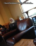I Found Dumbledore In A Local Starbucks...
