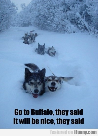 Go To Buffalo They Said