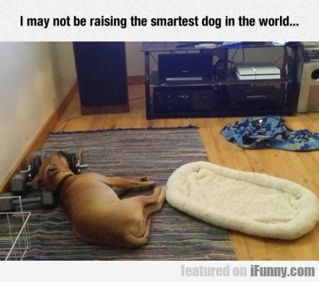 i may not be raising the smartest