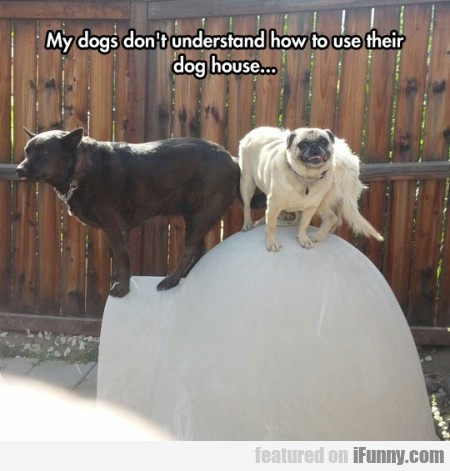 My Dogs Don't Understand