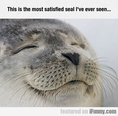 This Is The Most Satisfied Seal I've Ever Seen...