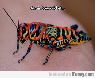 A Rainbow Cricket...