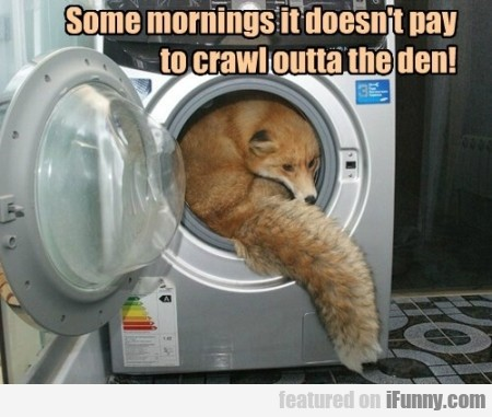 some mornings it doesn't pay to