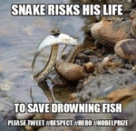 Snake Risks His Life
