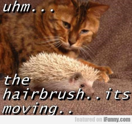 Uhm... The Hairbrush..its Moving