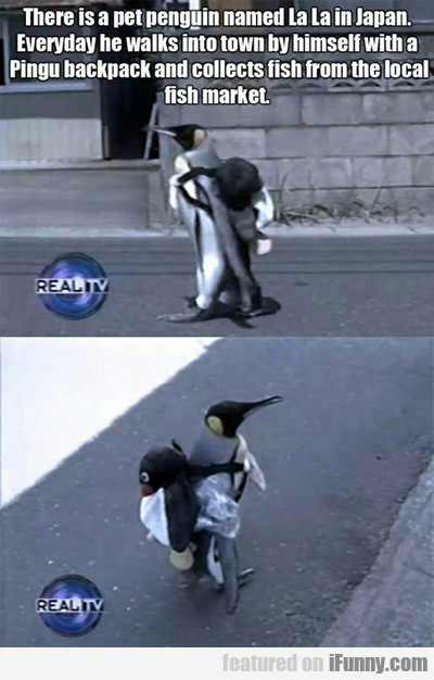 There Is A Pet Penguin...