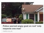 Police Warned Angry Goat On Roof...