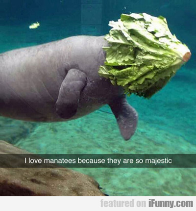 I Love Manatees Because They Are So Majestic...