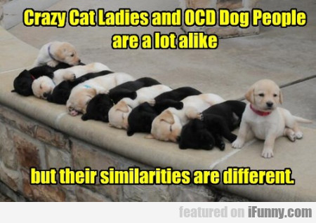 Crazy Cat Ladies