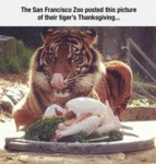 The San Francisco Zoo...
