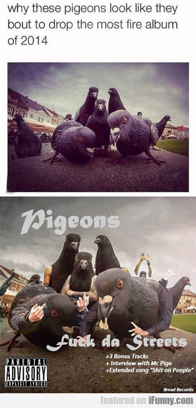 Why These Pigeons Look Like...