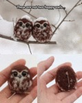 These Are Not Two Happy Owls...