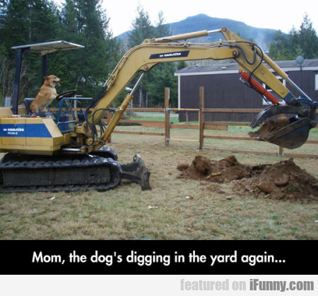 Mom The Dog's Digging
