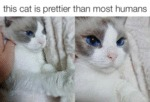 This Cat Is Prettier