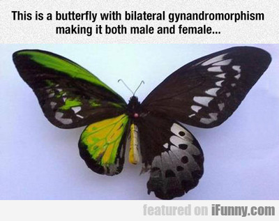 This Is A Butterfly With...