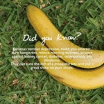 Did You Know? Bananas Combat Depression...