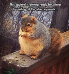 This Squirrel Is Getting Ready For Winter..