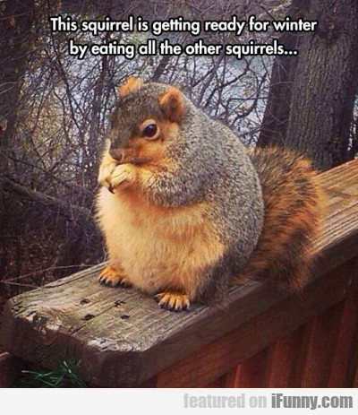 This Squirrel.