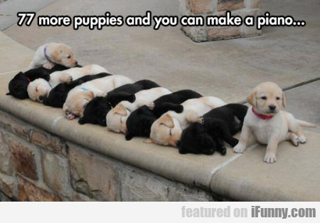 77 More Puppies And