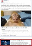 Monkey Tasered After