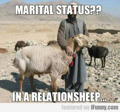 Marital Status, In A Relationsheep...