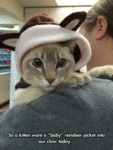 So A Kitten Wore A Baby Reindeer Jacket Into...