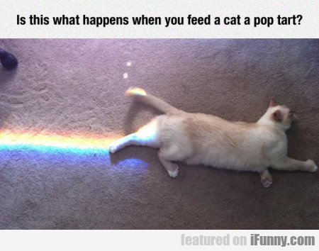 Is This What Happens When You Feed A Cat...