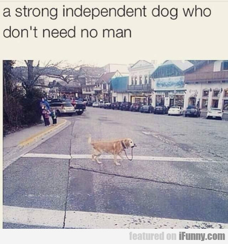 A Strong Independent Dog Who Don't Need.