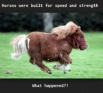 Horses Were Built For Speed...