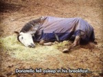Donatello Fell Asleep In His Breakfast