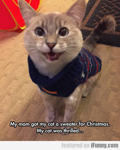 My Mom Got My Cat A Sweater For Christmas