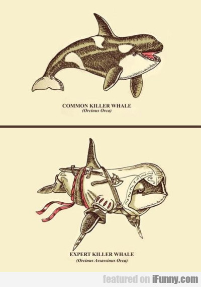 Common Killer Whale