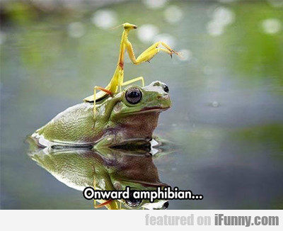 Onward Amphibian...