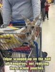 Edgar Scooped Up On...