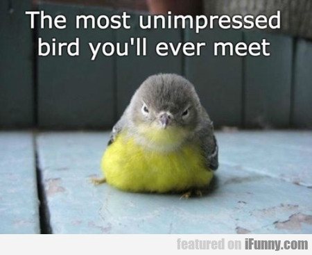 The Most Unimpressed Bird You'll Ever...
