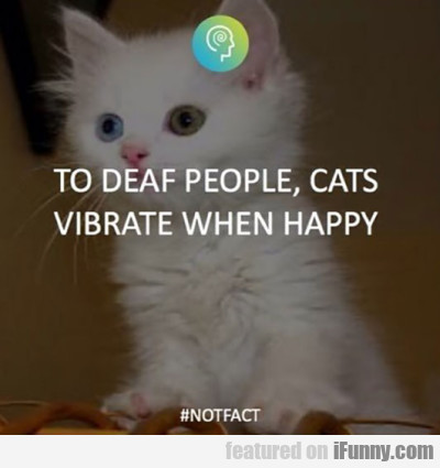 to deaf people cats