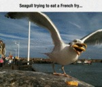 Seagull Trying To Eat