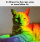 Cat Sitting Next To A Stained Glass Window..