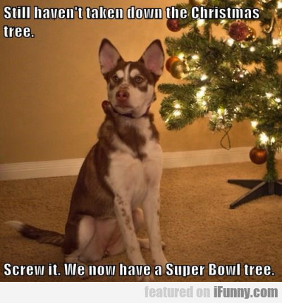 Still haven't taken down the Christmas tree...