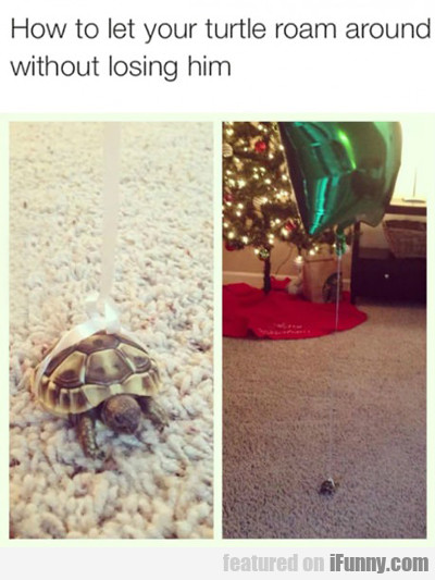 How To Let Your Turtle...